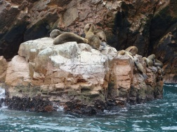 Islas Ballesta seals