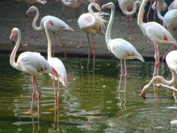 Flamingoes in Kowloon Park