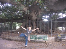 Rubber Tree in La Recoleta Cemetary