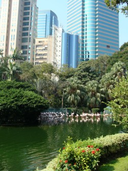 Flamingos in Kowloon Park